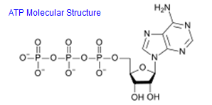 ATP Molecular Chemical Structure